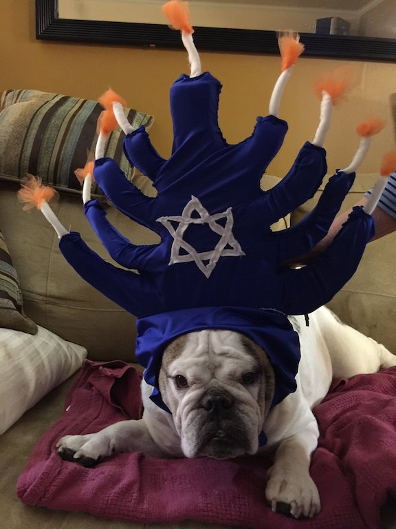 bulldog_menorah
